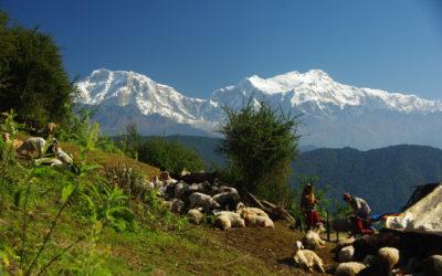 Haute route des Annapurna