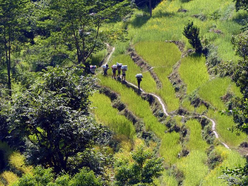 De Tumlingtar à Lukla région Everest