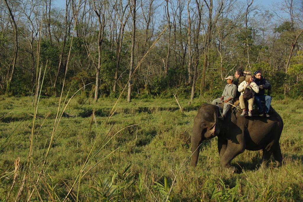 Circuit Népal safari éléphant