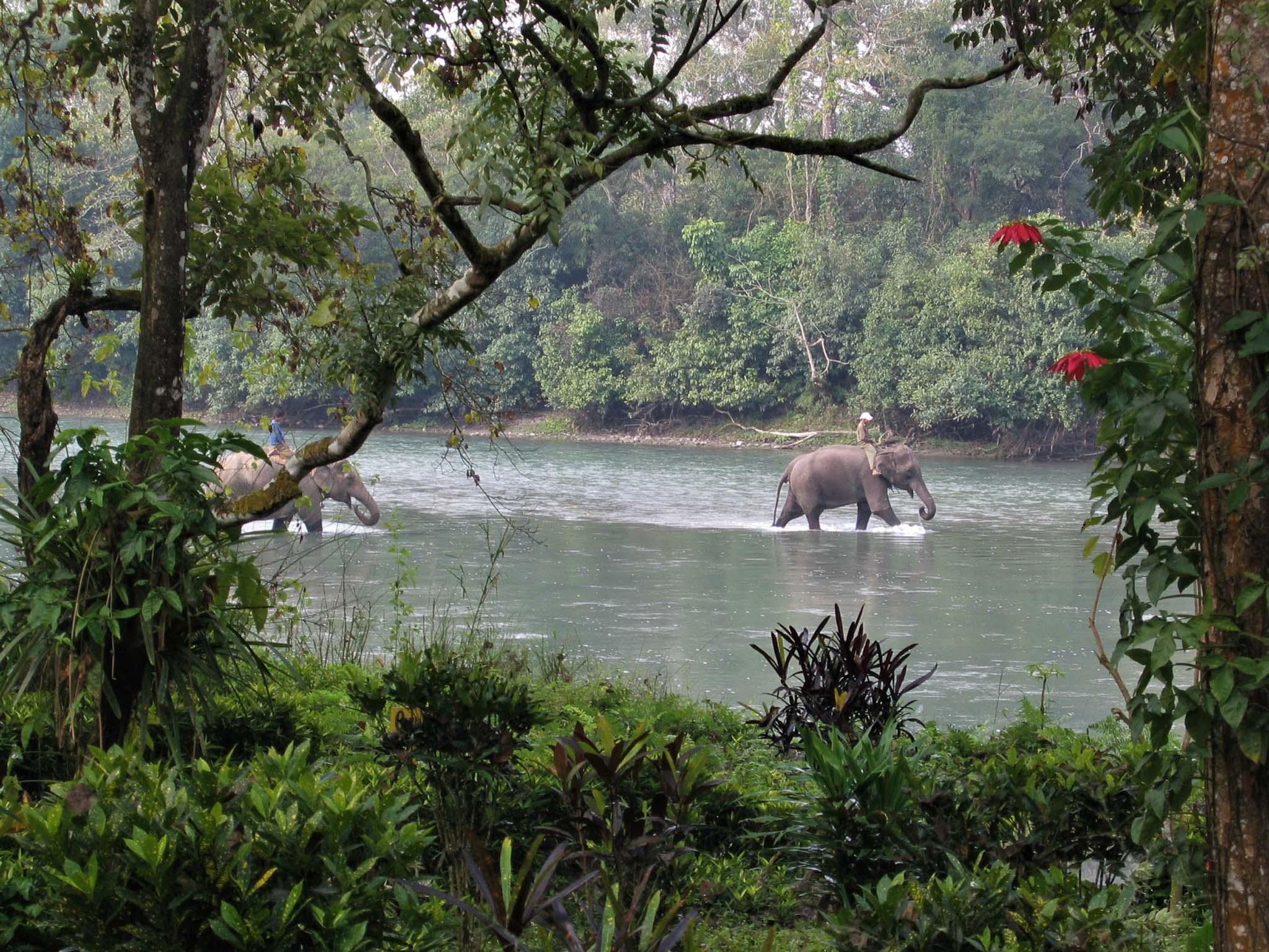 Circuit Népal safari