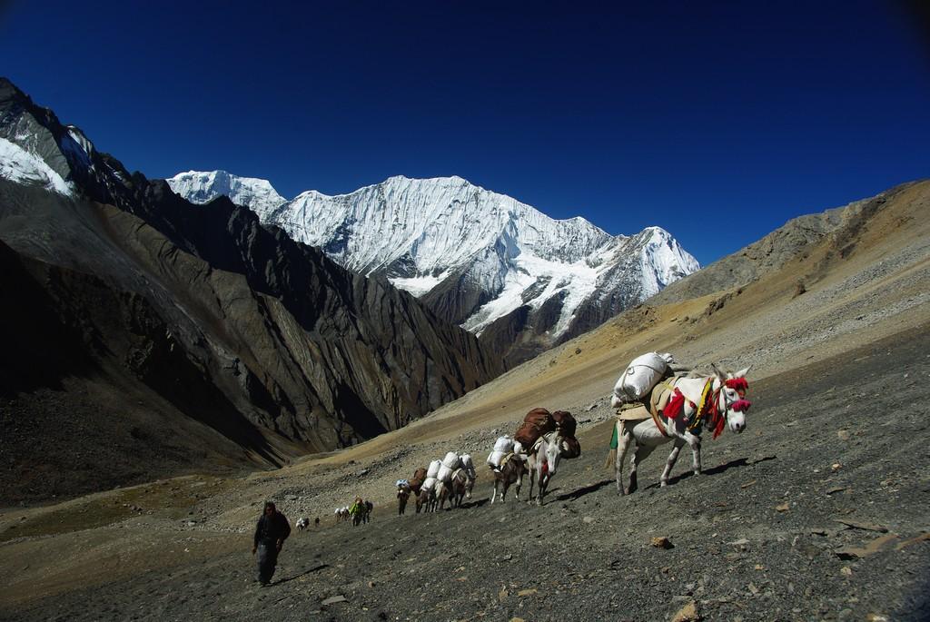 Traversée Haut Dolpo Mustang, portage