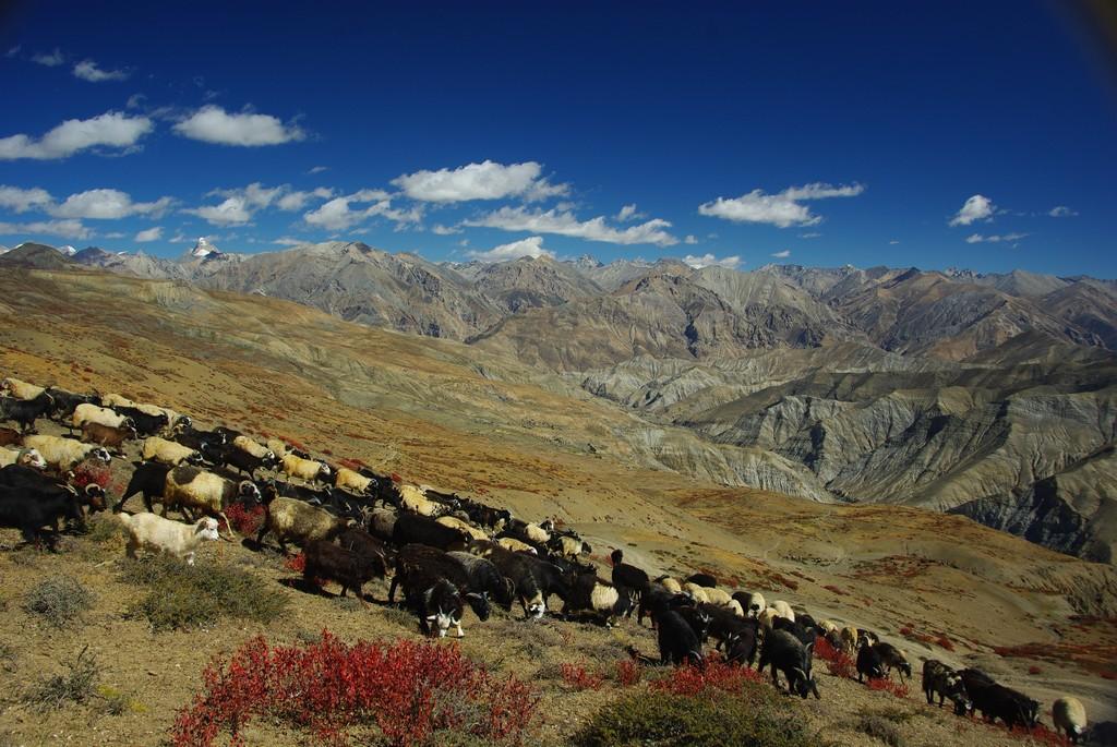 Trek Haut Dolpo Mustang, Tsankang