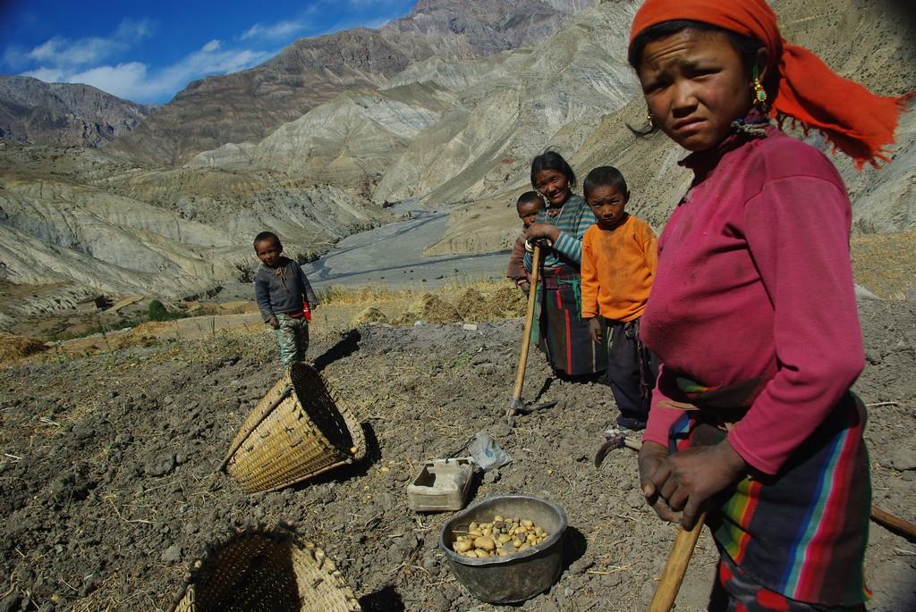 Trek Haut Dolpo Mustang, récolte pommes de terre