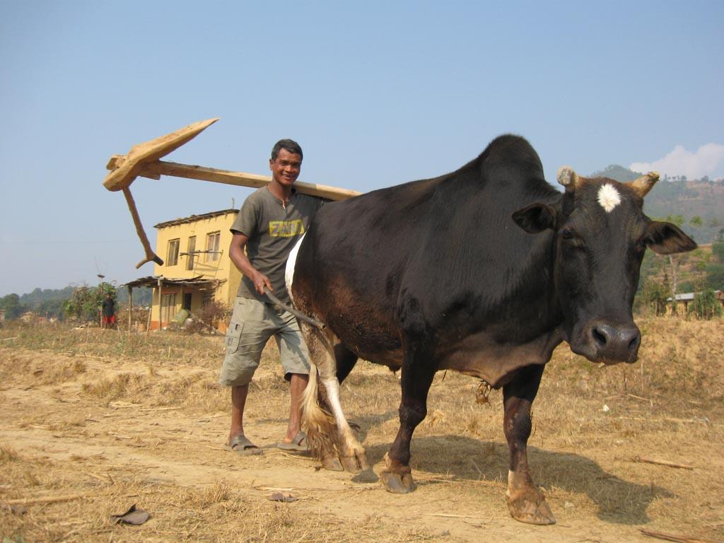 Trek chez l'habitant, activités népalaises