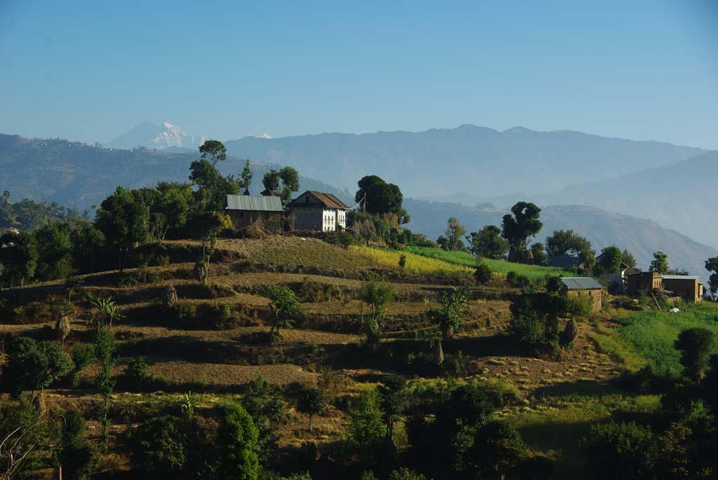 Trek Népal immersion, rizières